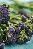 Purple Sprouting Broccoli Ingredients Image - Arthur David